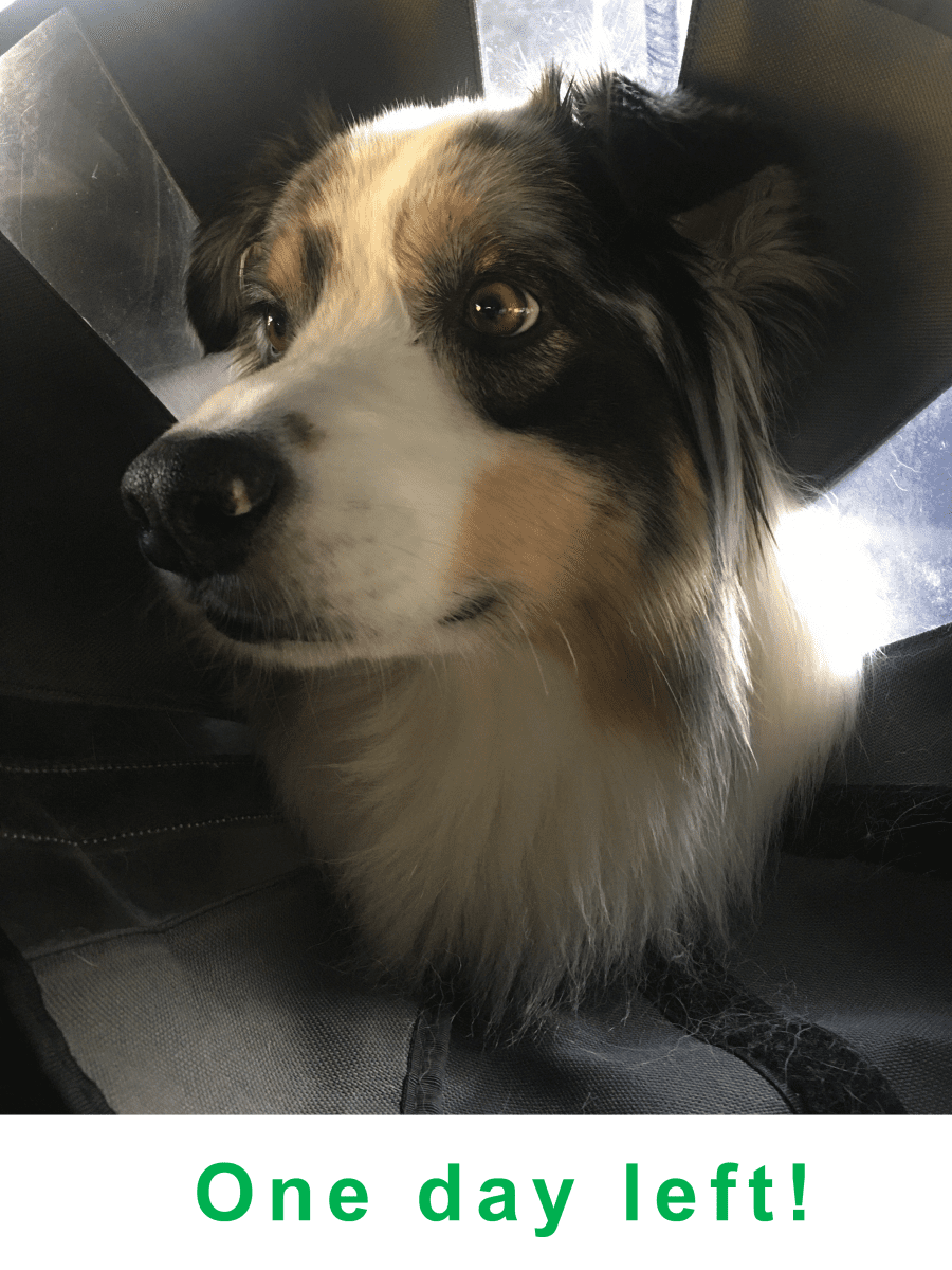 Eva in car with cone